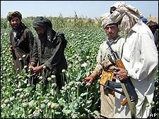 تعدادی ازطالبان در یکی از مزارع کشت خشخاش و توليد ترياک دیده میشوند