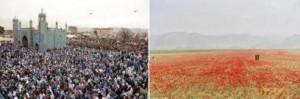 دشتهای پراز  گل لاله مزارشریف و میله نوروز در آرامگاه حضرت علی ( ع ) شهر مزارشریف