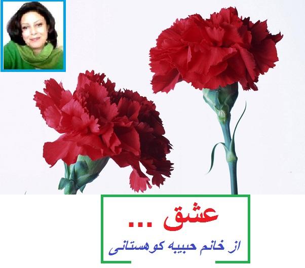گل میخک سرخ