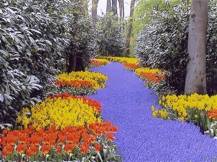 باغ گل